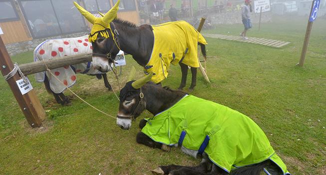 TdF2017 12 etape Donkeys i gult prikker og green