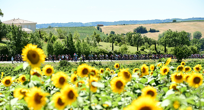 TdF2017 14 etape peloton solsikker